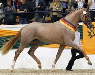 کاربرد اسب نژاد تراکنر