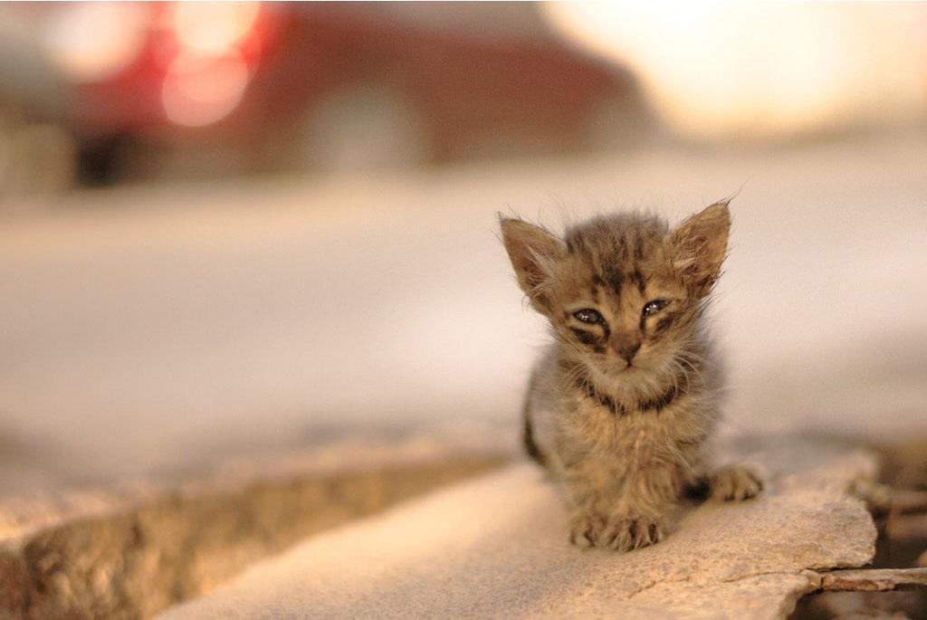 پیشنهادهایی برای سرپرستی گربههای خیابانی