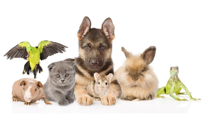 انتخاب صحیح حیوانات خانگی