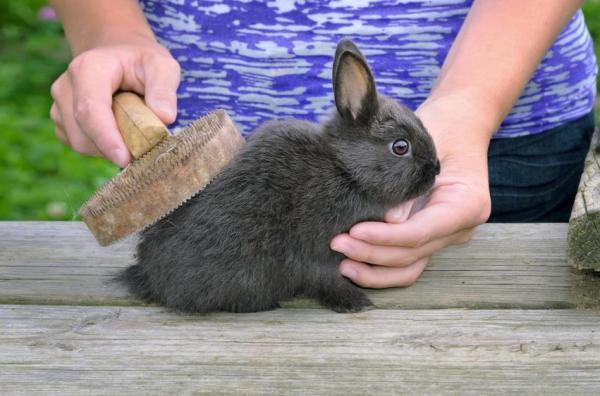 اهمیت شانه زدن موی خرگوش
