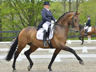 اسب آلمانی الدنبورگ