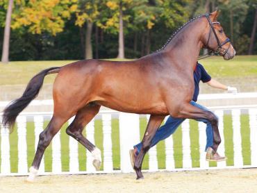 اسب الدنبورگ