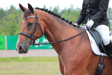 اسب آلمانی وست فالین