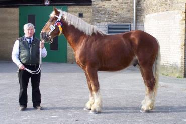 اسب شلسویگ