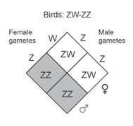روش های تعیین جنسیت  در طیور