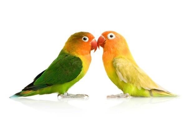 تکنیکهای تعیین جنسیت در پرندگان