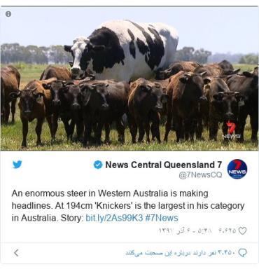گاو غولپیکر استرالیایی