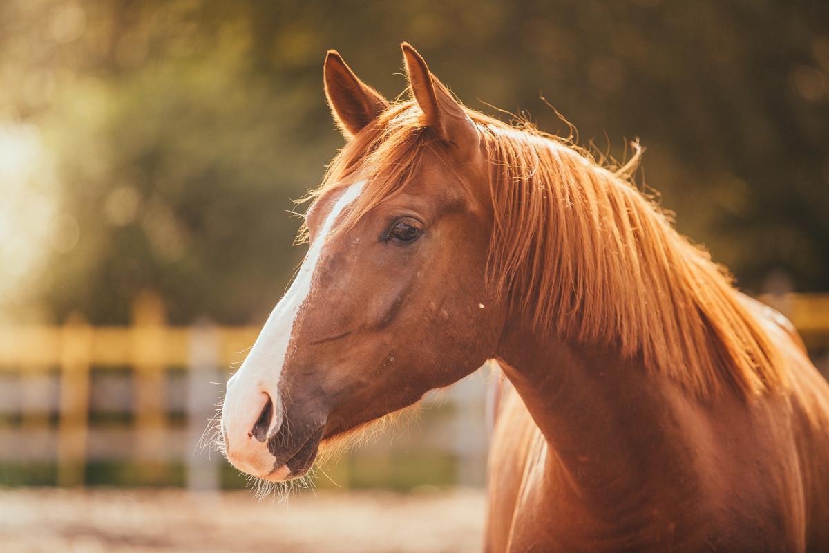 واقعیات جالبی که درباره اسبها نمیدانستید