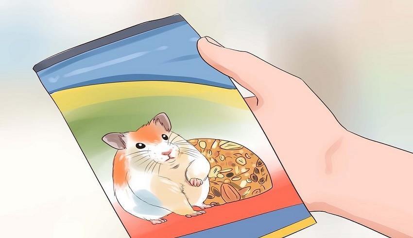 رژیم غذایی مناسب برای همستر