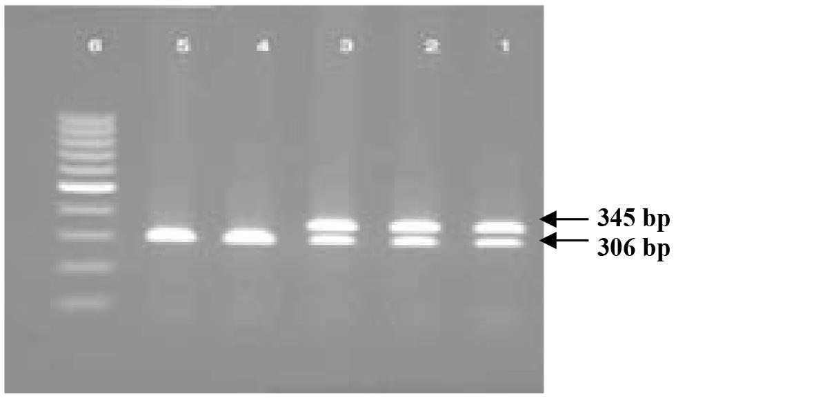 واکنش PCR برای تعیین جنسیت قناری