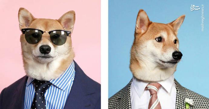 سگی که مدل لباس است