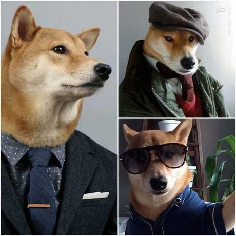 سگ مدل