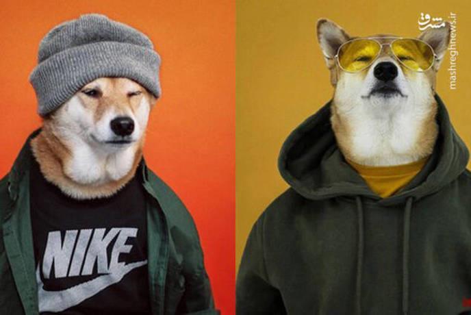 سگ مدل نایک