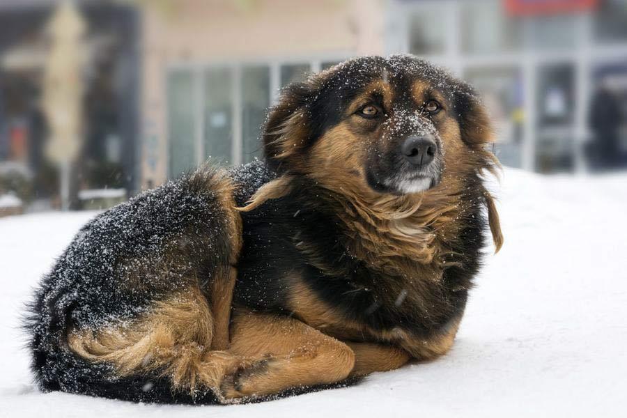 چطور بفهمیم سگ احساس سرما میکند