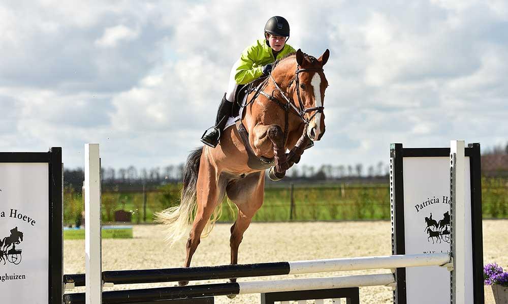 خوراک اسبهای ورزشی