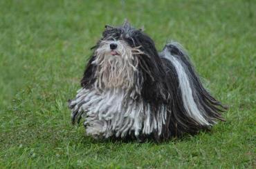 شرایط نگهداری سگ پولی