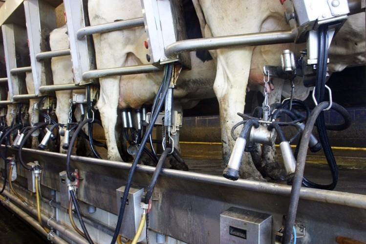 تأثیر دفعات دوشش در میزان تولید شیر