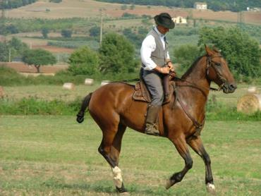 خصوصیات اسب نژاد مارمانو