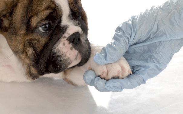 درمان حمایتی حیوانات