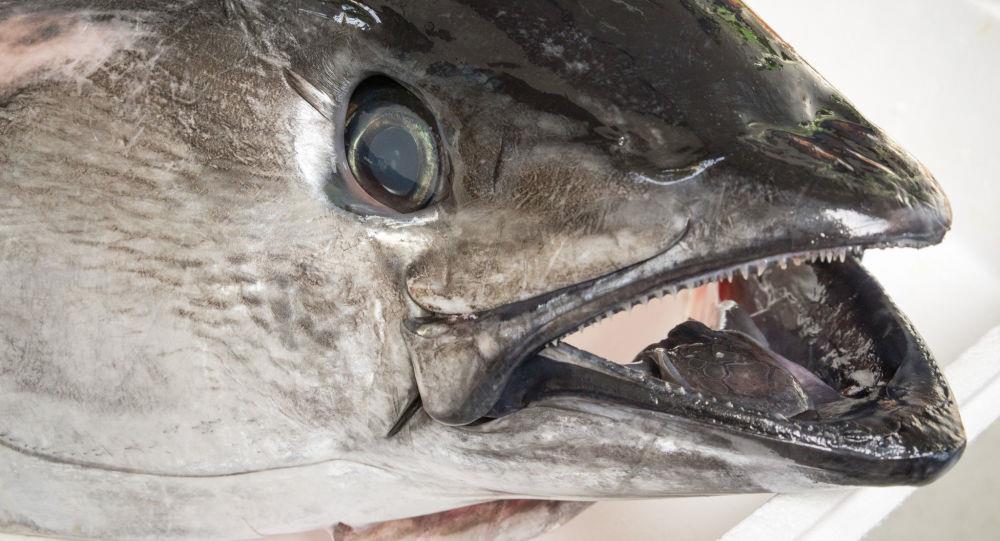 اعتیاد ماهیهای رودخانه تایمز به کوکائین