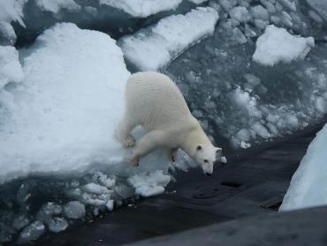 نابودی حیات وحش قطب