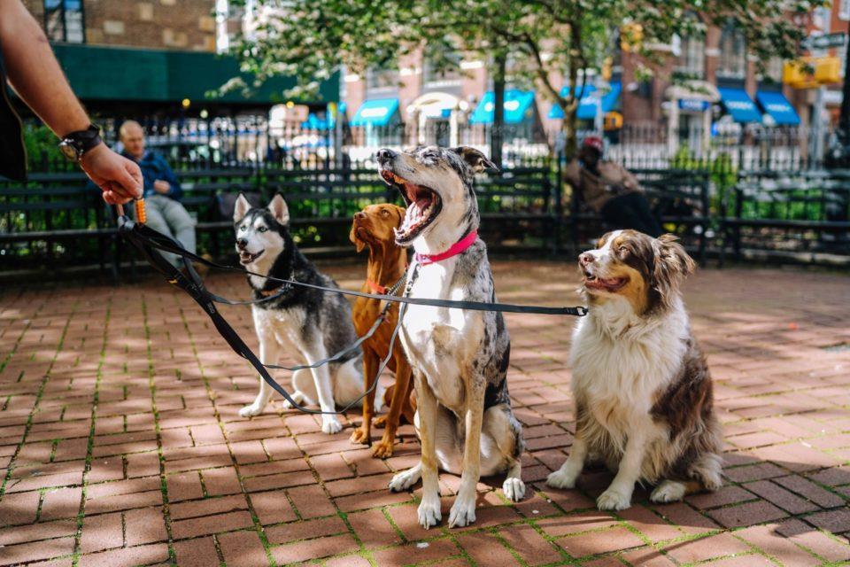 پارک، خانه شما نیست! سگها را ببندید