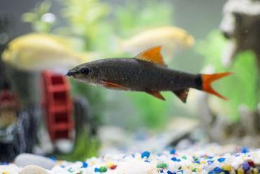 گونههای مختلف ماهی شارک