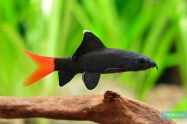 تغذیه ماهی شارک