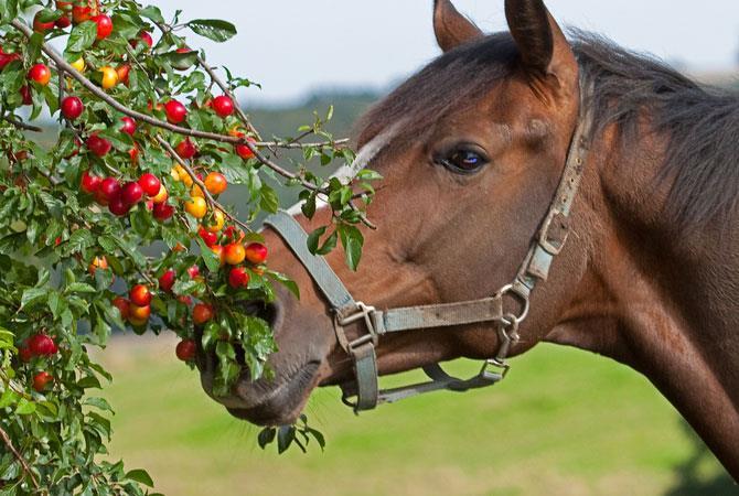 مسمومیت اسب