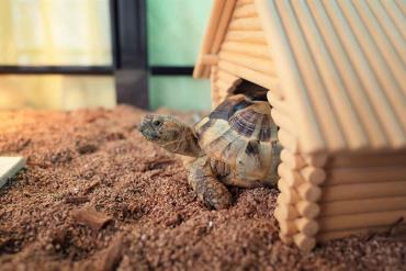نگهداری لاکپشت برکهای