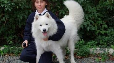 شرایط نگهداری سگ ساموید