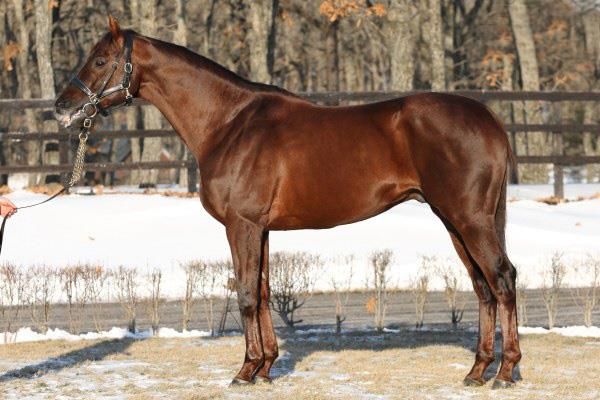 اسب نژاد فوریوزو