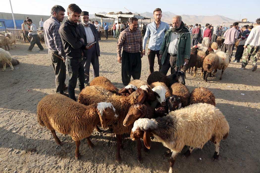 تشخیص گوسفند زنده سالم