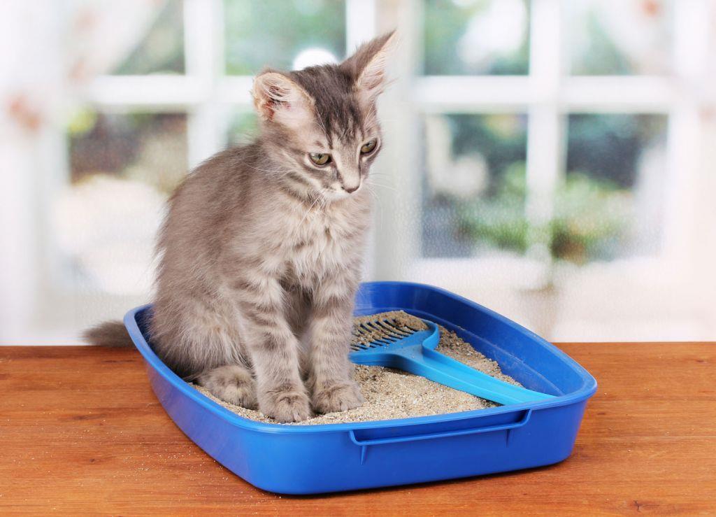 راههای رفع یبوست بچه گربه