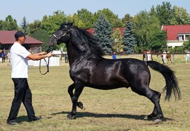 اسب نژاد نانیوس