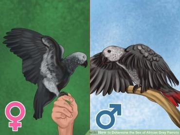 بالها را چک کنید