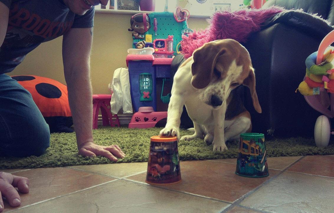 بازی کردن با سگ در خانه