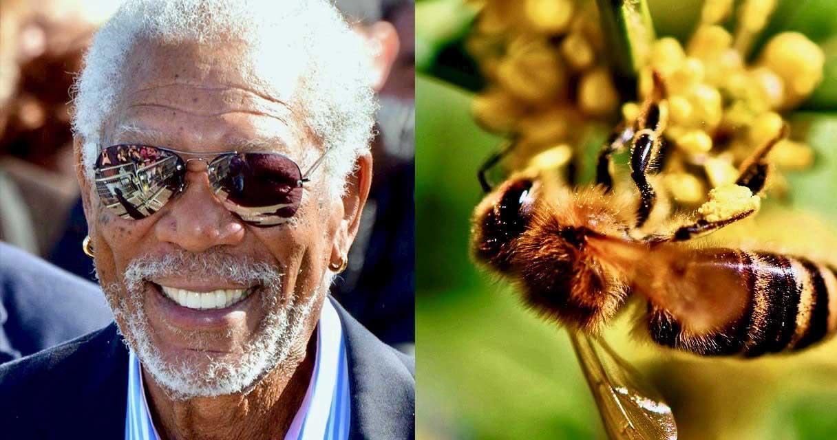 پرورش زنبور توسط بازیگر معروف