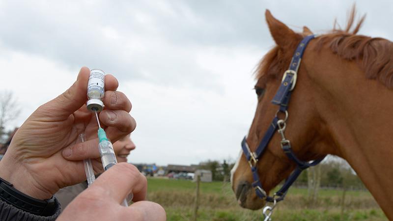 برنامه واکسیناسیون برای اسب