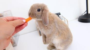 تغذیه خرگوش لوپ