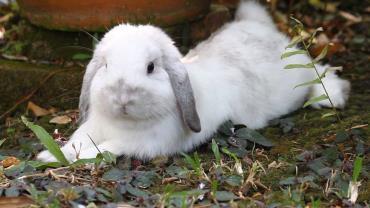 فعالیت بدنی خرگوش