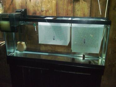 زایشگاه توری ماهی