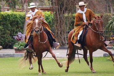 خصوصیات اسب پروین پاسو