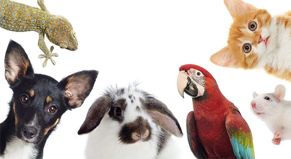 بیماریهایی که حیوانات خانگی بههمراه دارند
