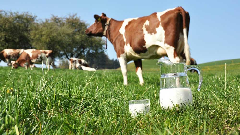 پیشگیری از كاهش چربی شیر