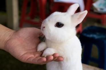 بازی با خرگوش هوتوت