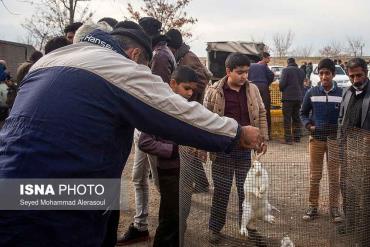 فروش خرگوش در بازار پرندگان مشهد