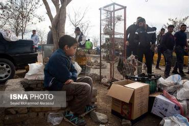 کودک در بازار پرندگان مشهد