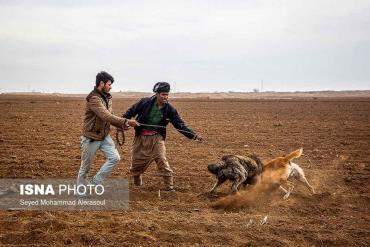 سگ دعوا در بازار پرندگان مشهد