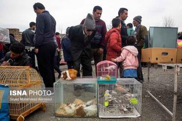بازار پرندگان مشهد